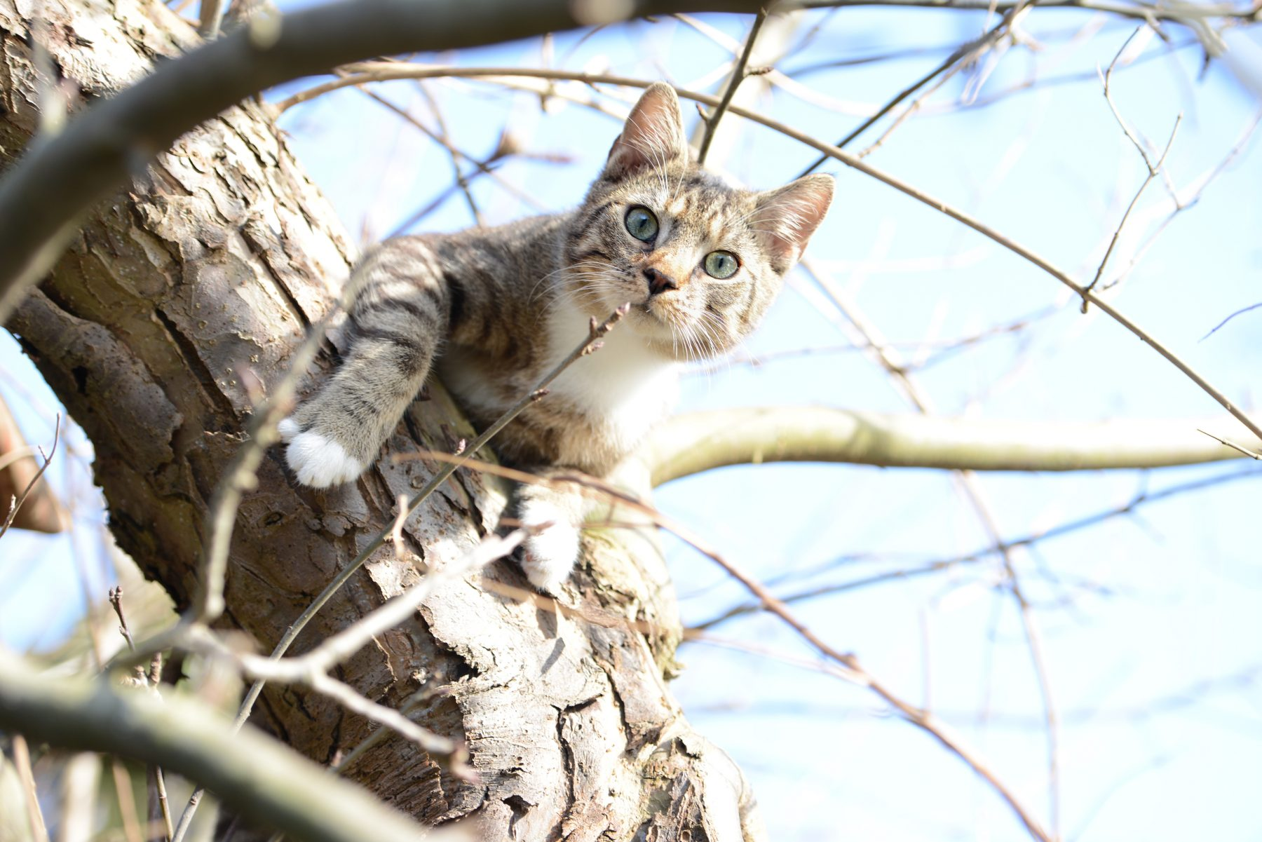 cat trying to hunt birds in a apple tree