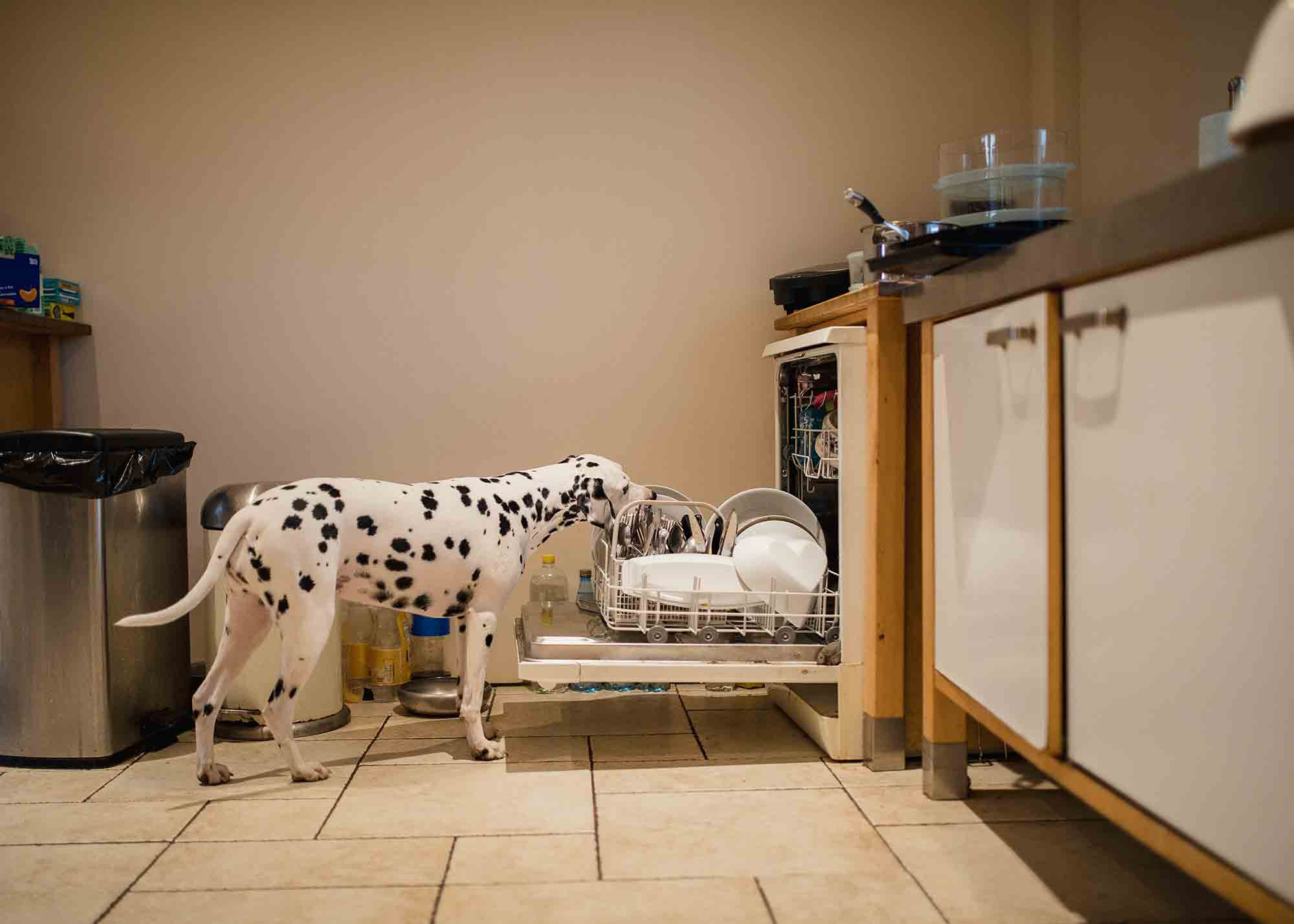 Keeping Them Safe: Pet Poisoning Prevention 101 | True Care ...