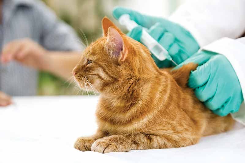 Pet vaccinations are an essential part of pet health and veterinary care
