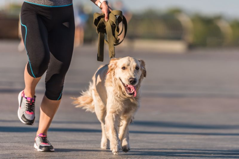 exercising with your pet