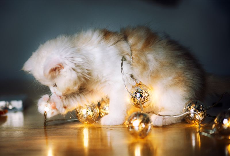 cat with christmas ornaments