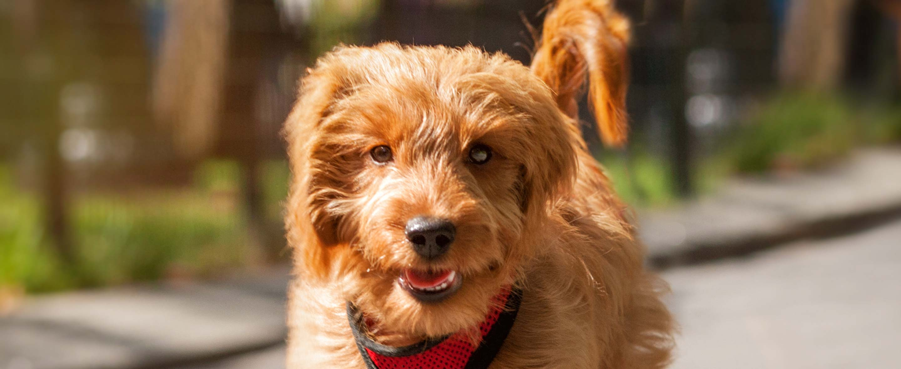 Howell NJ Veterinary Services for Freehold Pets | True Care
