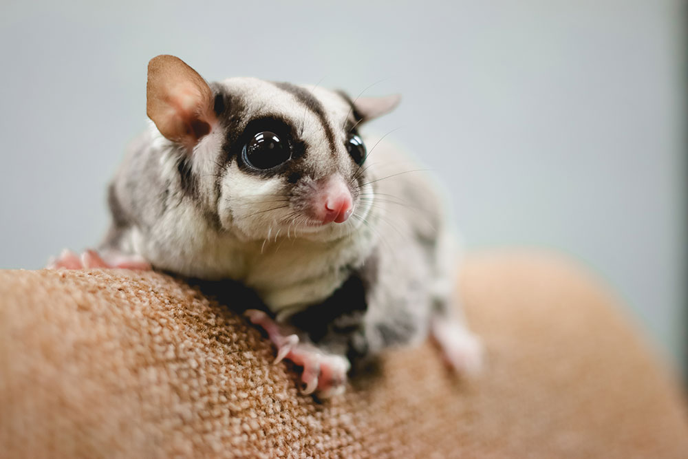 Freehold NJ Area Pet Clinic: Pet Vaccinations | True Care ...