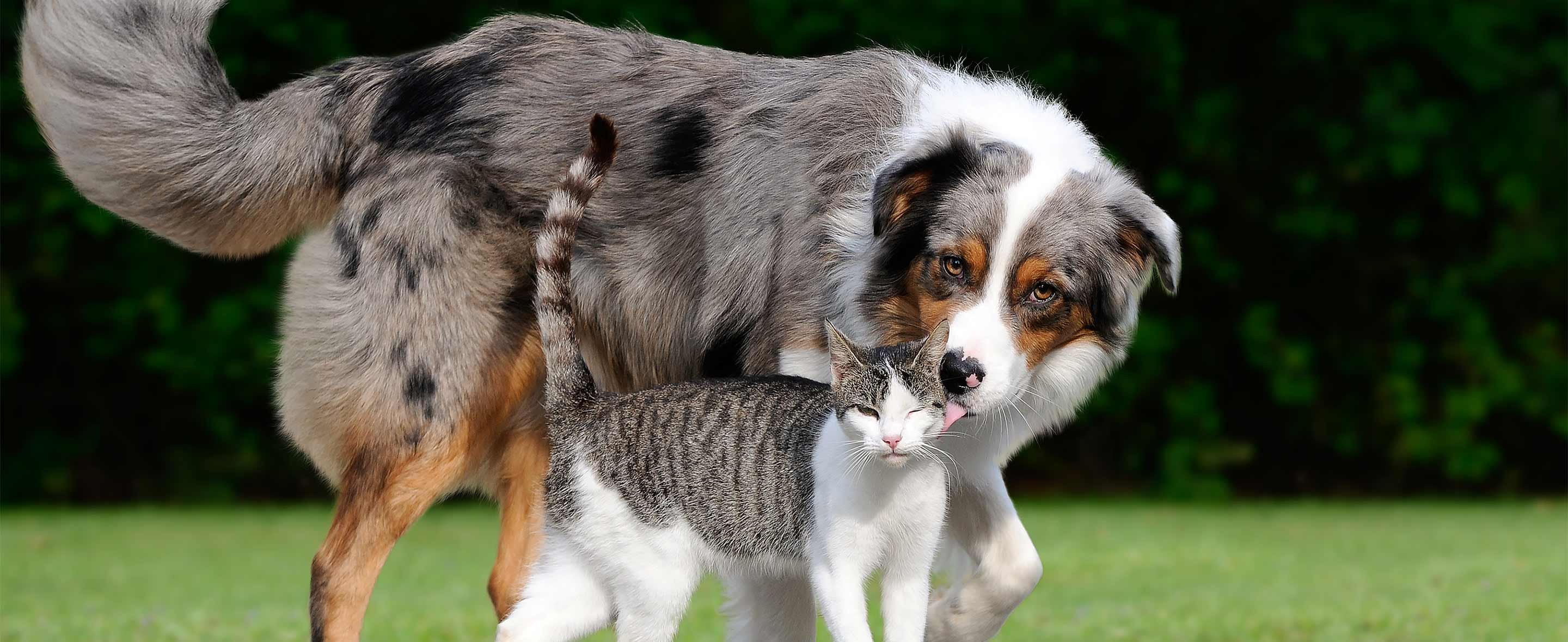 Dog and cat outdoors